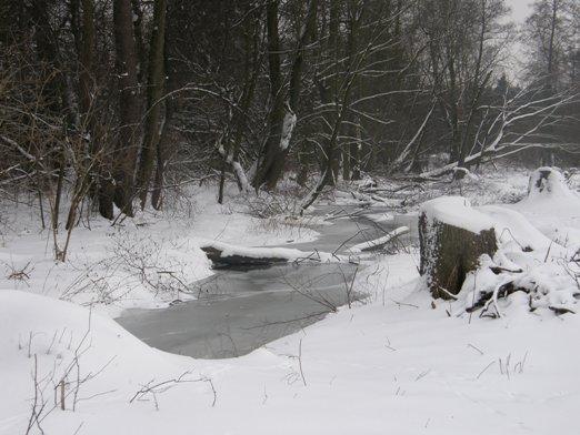 Zimowy spacer z foksem